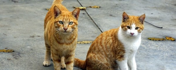 Why Adopt a Rescue Cat?