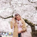 cherry blossoms - university of washington - seattle spring