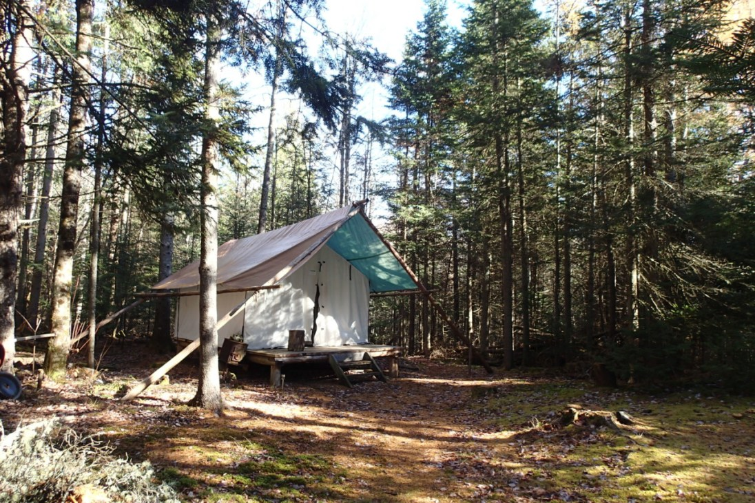 Mixed Forest Wall Tent