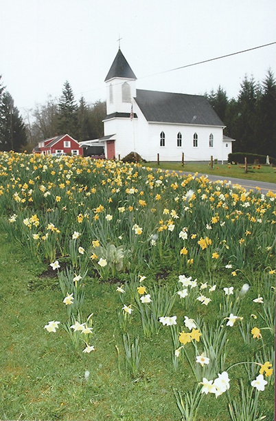 Photo: Solveig Lee The church was surrounded by a riot of daffodil blooms earlier this spring. They have since been suceeded by tulips, according to reports.
