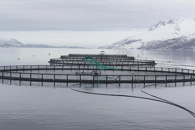 Aqualine fish cages in Velfjorden, Brønnøy, Norway.