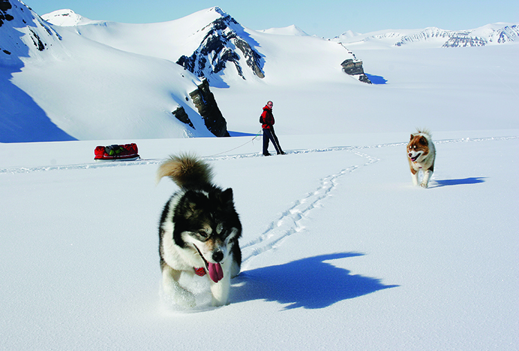 Photo: Kristin Folsland Olsen / Visitnorway.com Dogsledding is a good way to get out into the stunning Arctic scenery on display in Svalbard—but sometimes the dogs need to stop and play.