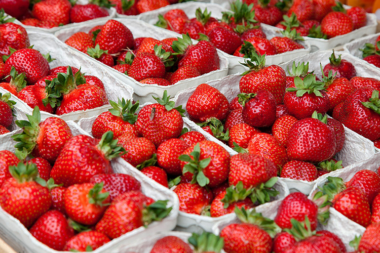 Photo: Thomas Wolf, www.foto-tw.de Norwegians and Americans alike celebrate the arrival of sweet, juicy strawberries each year.