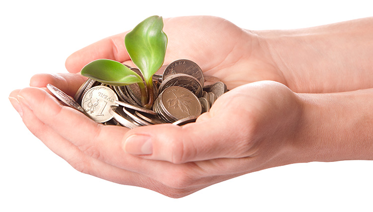Hands holding coins with a seedling growing from the money representing the investments of business angels.