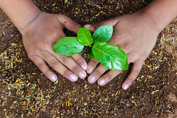 Hands around a green plant in the ground.