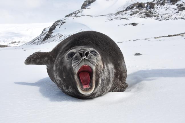 climate roar