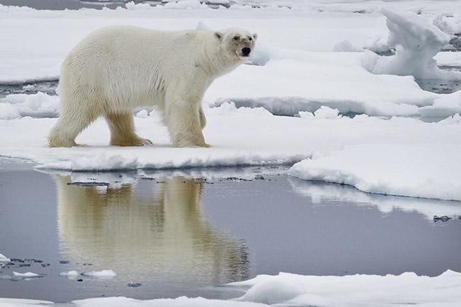 Arctic wildfires - ice melt