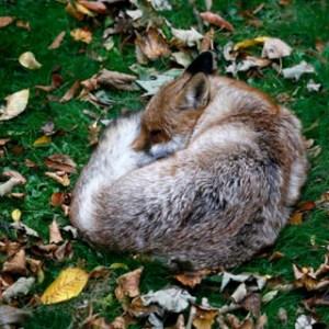 fact check: fox