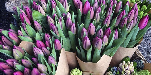 flowers - Vikingstad