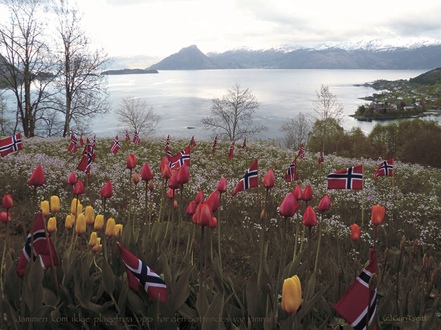 a field of yellow and pink tulips dotted with Norwegian flags overlooking a fjord with mountains in the background from Gyri Tveitt