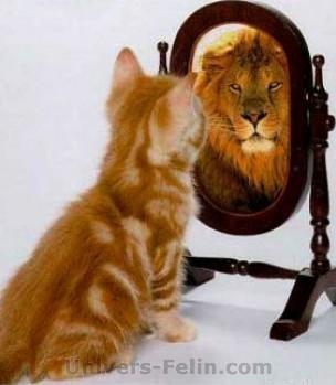 chat qui se regarde dans un miroir