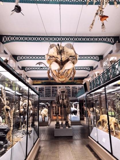 Musée Histoire Naturelle Lille