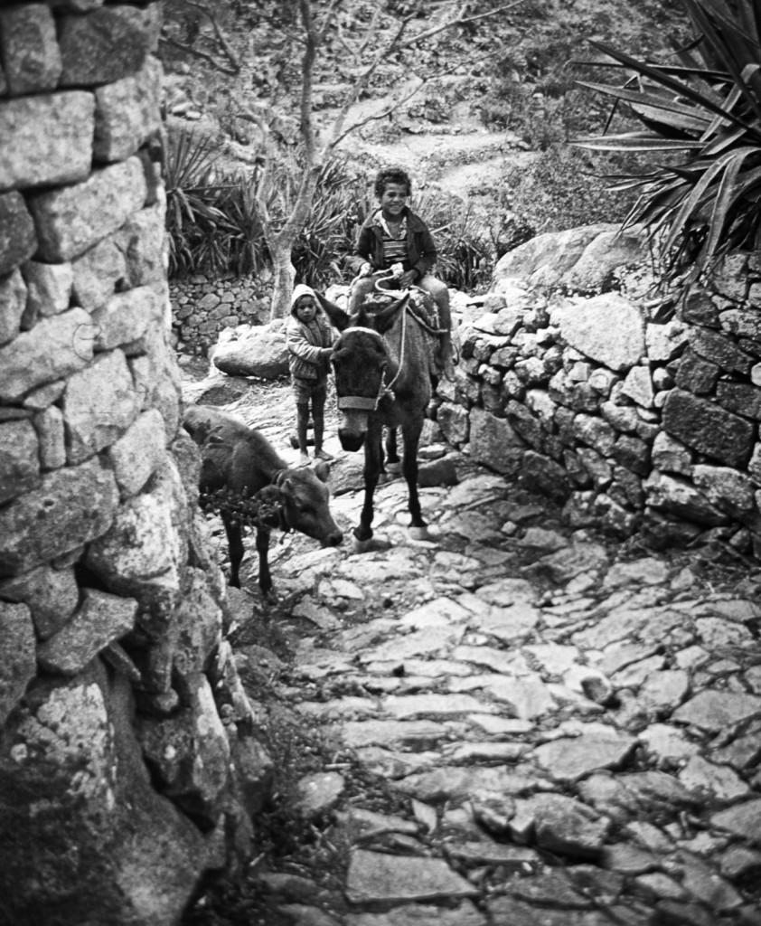 8- Ilha do Fogo a renacer das cinzas - Revista Nos Genti -