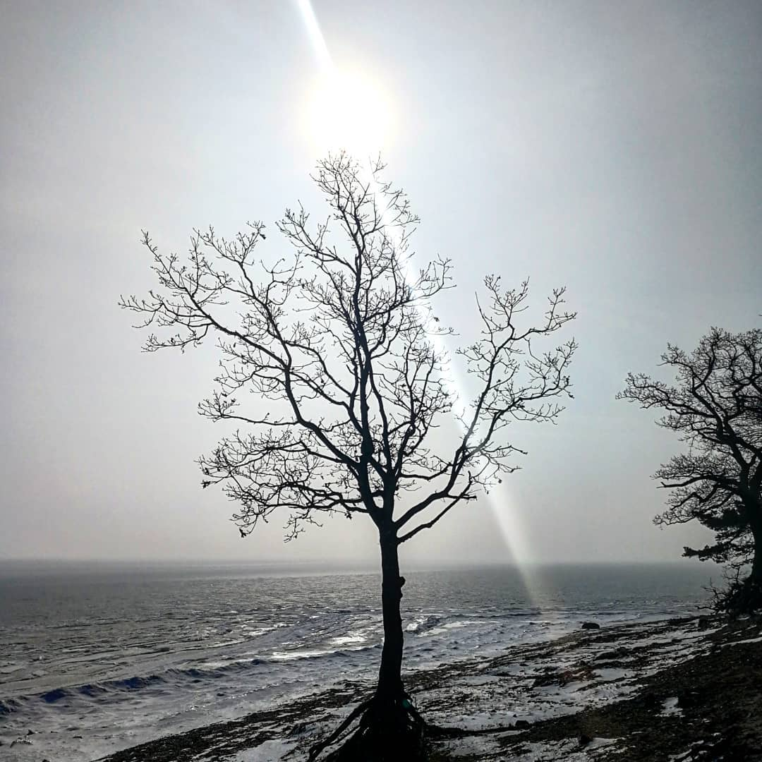 solitude tree frozen contrast sun sunlight sunrays winter winterindenmark silhouettehellip