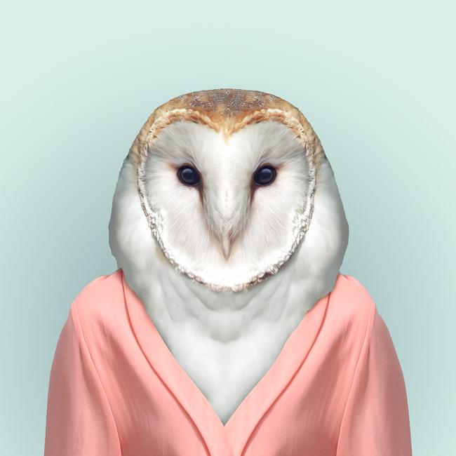 zoo portraits-yago partal