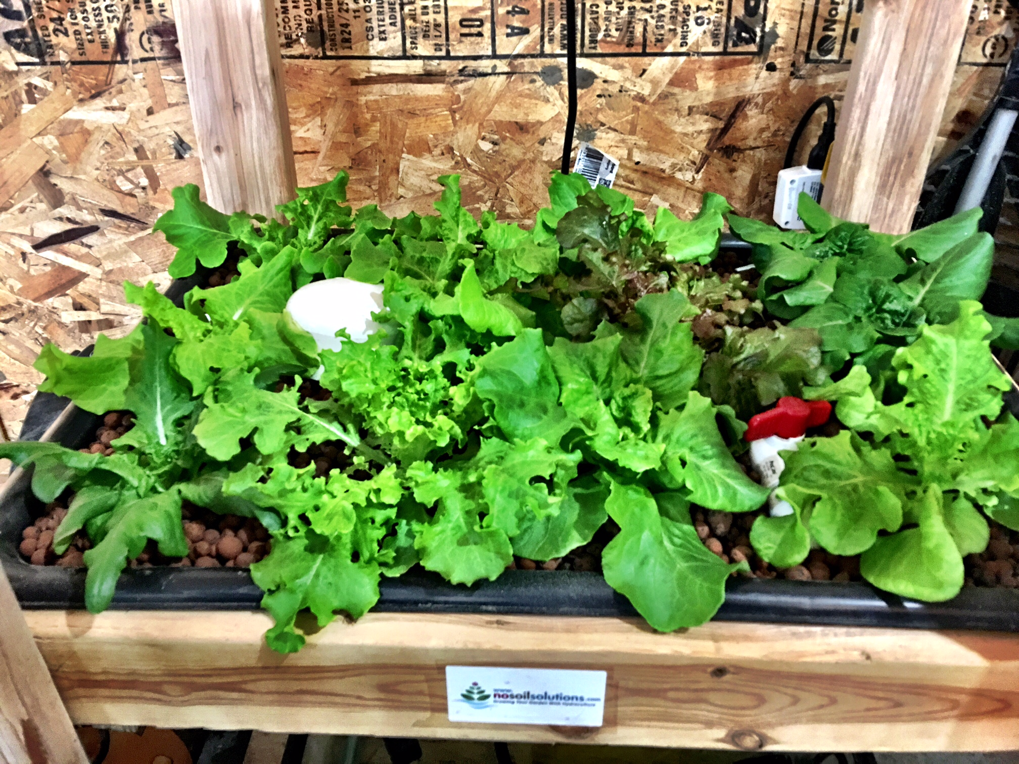What Is Ebb And Flow Hydroponics? - NoSoilSolutions