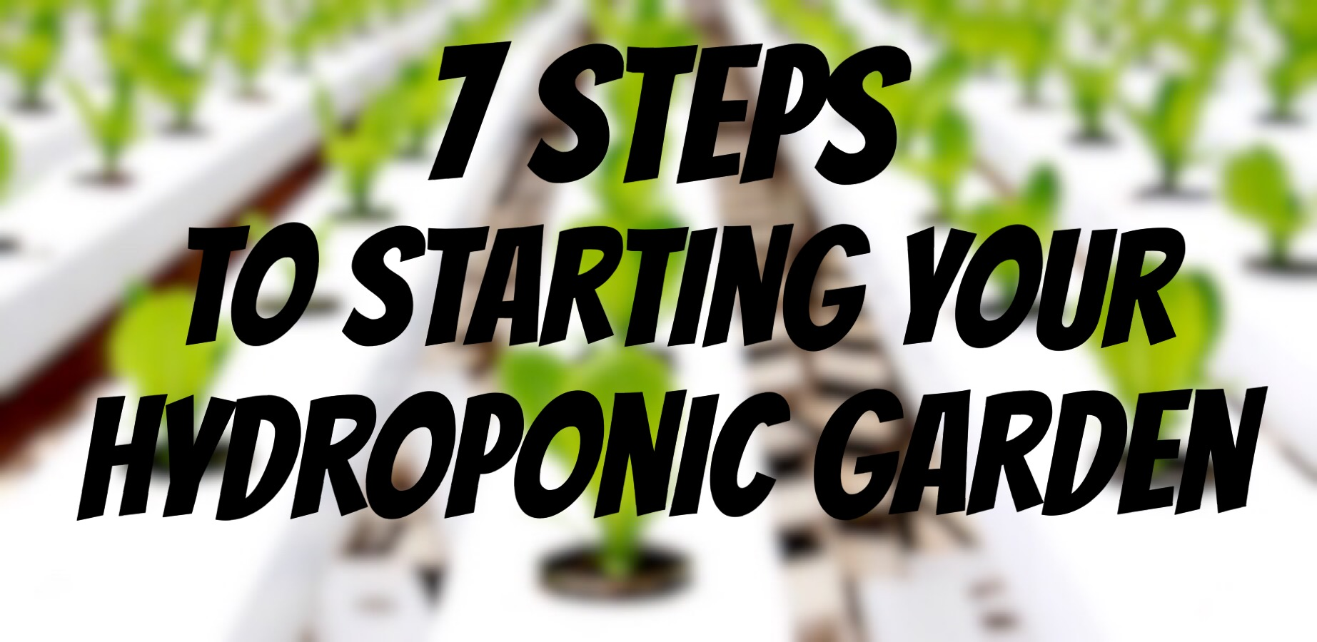 How To Start A Hydroponic Garden In 7 Steps | NoSoilSolutions