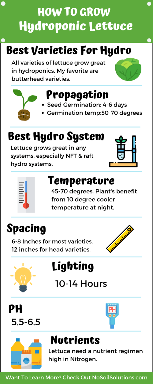 How to grow hydroponic lettuce Infographic
