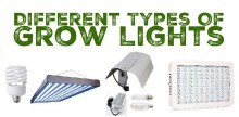 Different Types of Grow Lights For Hydroponic Gardens