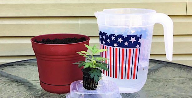 How To Transplant A Hydroponic Plant Into Dirt