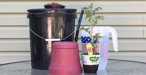 How To Transplant A Plant From Dirt To Hydroponics