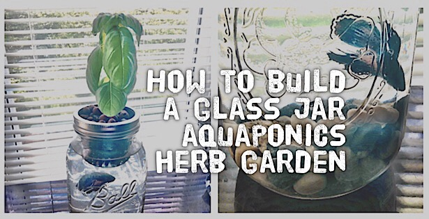 how to grow herbs in water in a jar