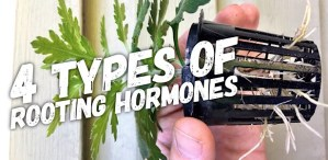 4 Different Types of Rooting Hormones