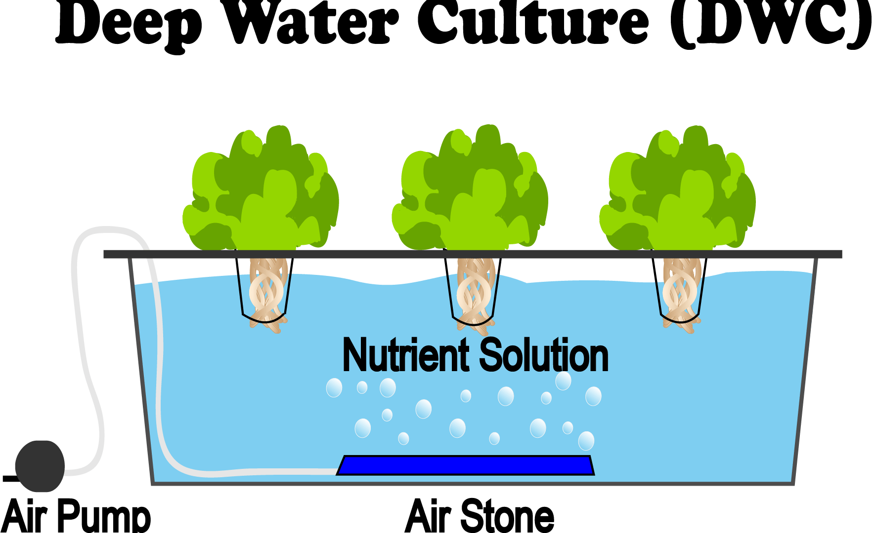What Is Deep Water Culture (DWC) Hydroponics - NoSoilSolutions