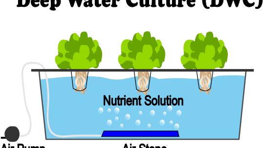 This is a diagram of a deep water culture (DWC) hydroponics system