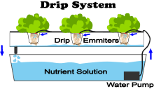 What Is Drip Hydroponics?