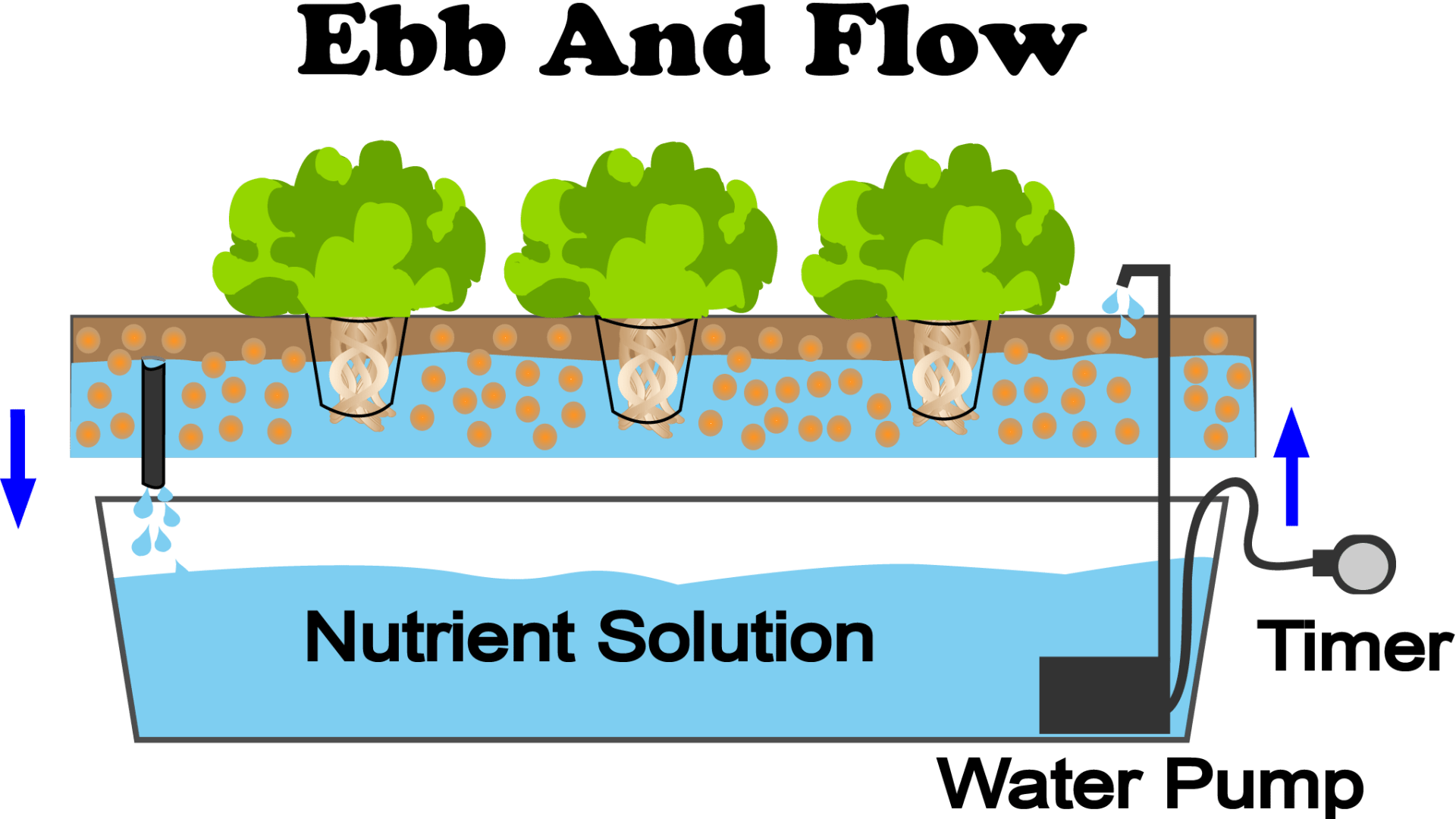 This is a diagram of an ebb and flow hydroponic system
