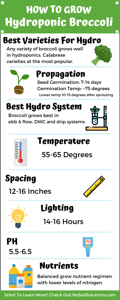 How to grow hydroponic broccoli infographic