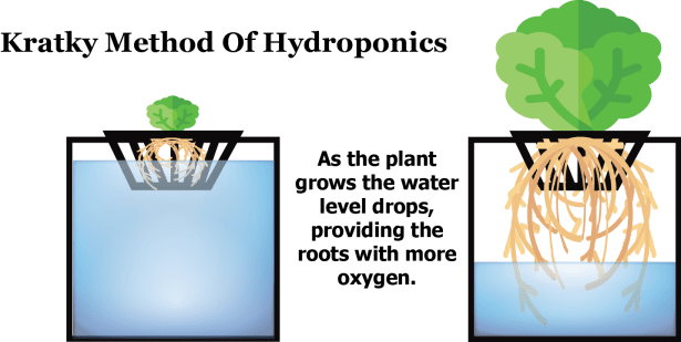 The Kratky Method Of Hydroponic Gardening