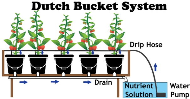Diagram of how a dutch bucket hydroponic system works.