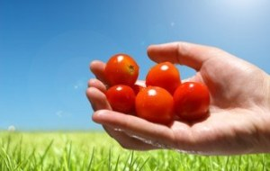 Propiedades del Jitomate. Origen y 8 Beneficios para la salud