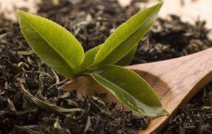Té Verde para Adelgazar y otros beneficios de este remedio natural