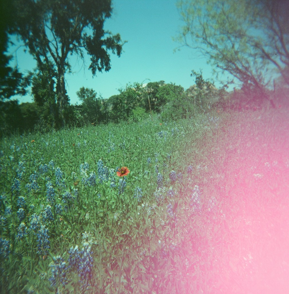 wildflower film photography