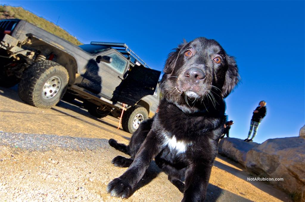 Dog in a Jeep at Cleghorn Trail