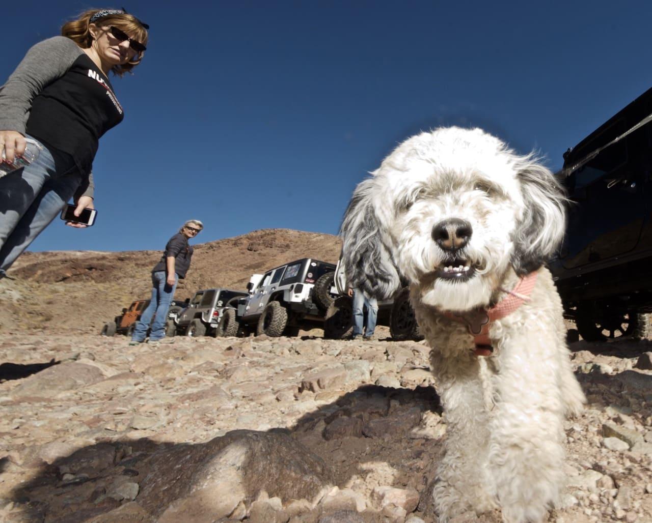 Jeep dog!