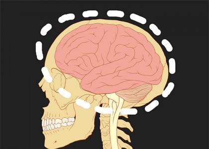 脳イメージ
