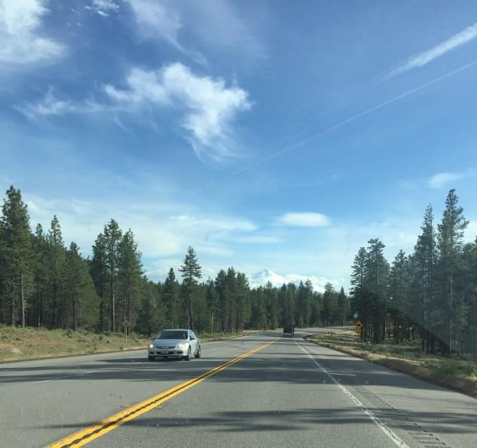 Paisaje de pinos en la Highway 97 en California
