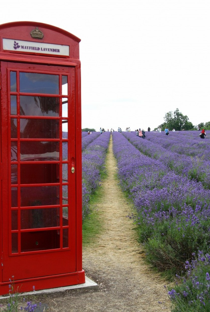 Mayfield Lavender Farm, Londres