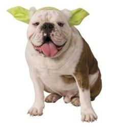 yoda-dog-headband