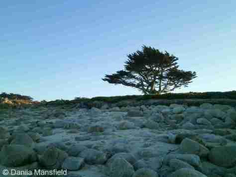 Monterey & Big Sur (16)