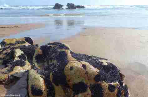COROMANDEL - Hot Water Beach