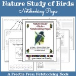 Freebie: Nature Study of Birds Notebooking Pages