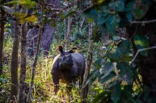 Das Rhino!