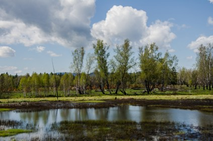 Sümpfe, Moore, Birkenwald, das ist Sibirien