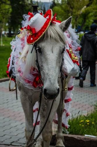 Karneval in Krasnoyarsk, und alle machen mit!
