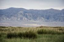 Steppe und Gebirge am Gobirand